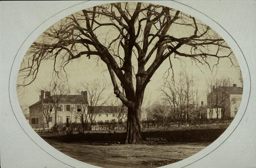 View with Bulletin Elm in foreground (photo before 1861)